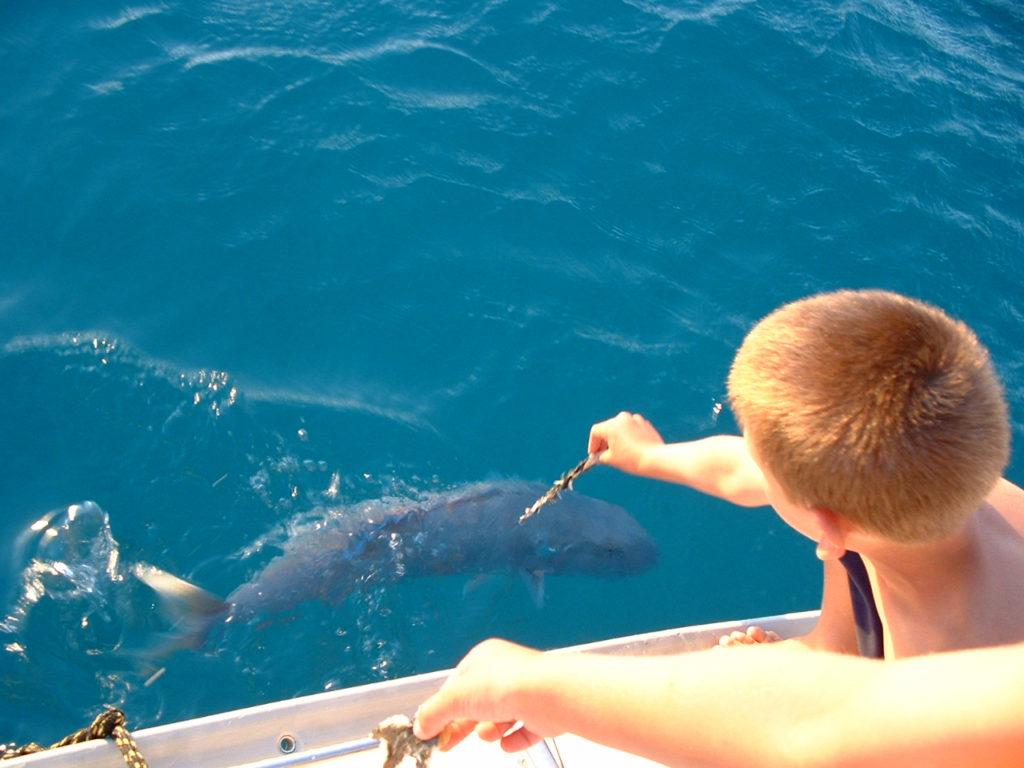 227 fish feeding from boat[1]